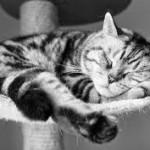 Katkendlik uni teeb hajameelseks